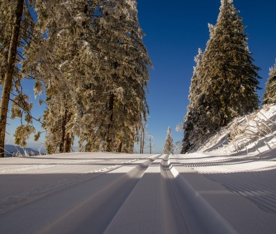 cross-country-ski-trail-1839039
